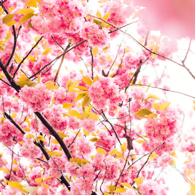 Mit Frühlingsdüften den Frühling mit allen Sinnen empfangen