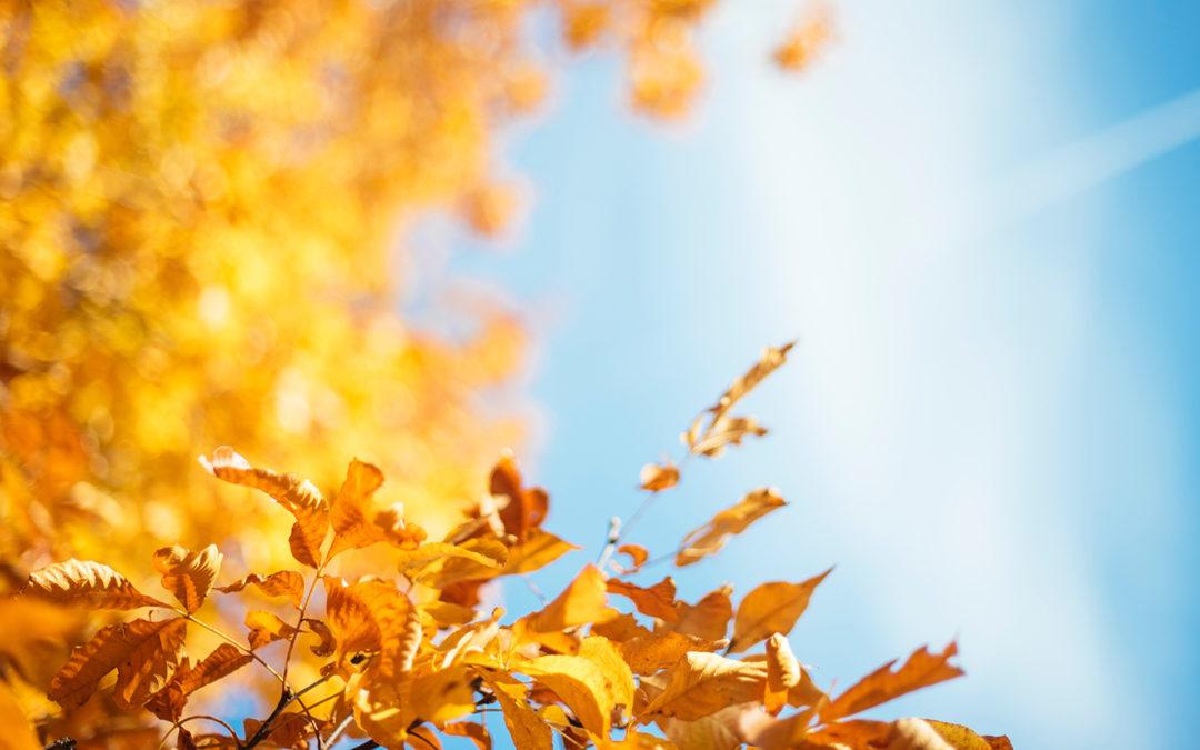 Der Herbst ist gekommen – es wird bunt im Wald