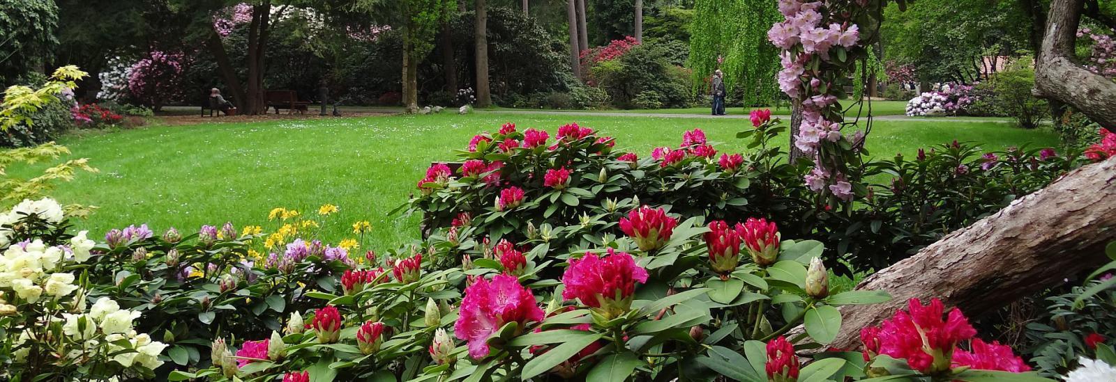 Rhodendronpark Westerstede