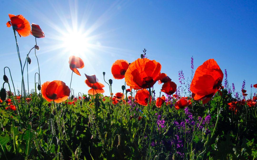 Grandioses Blütenfeuerwerk